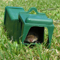 Mouse release-ah, that's better